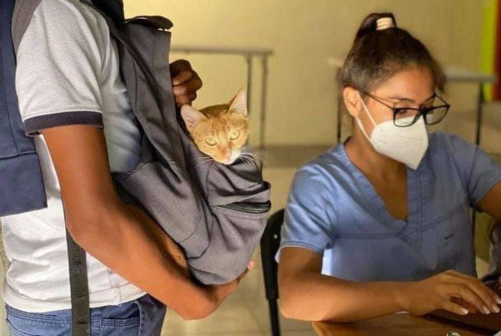 Guatemala NPO Ayuda Para La Salud de Perros y Gatos
